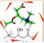 lcarnitin-thanh-phan-penirum-A